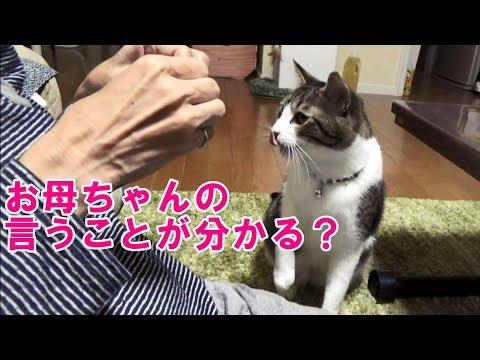 お母ちゃんの言葉を理解できるとしか思えない猫こむぎ