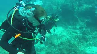 Diving Molasses Reef