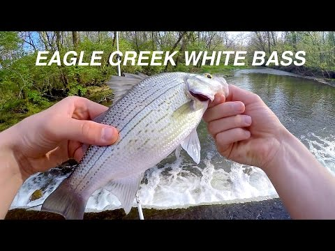 Indiana White Bass Fishing