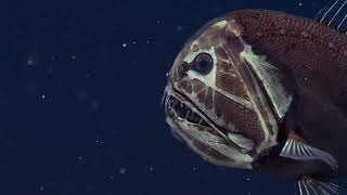 Mariana Trench - David Attenborough's Documentary on the Deepest Sea Floor