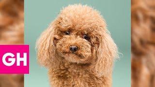 I Love My Pet Natural Shampoo Concentrate 1-32 Anjing Kucing Hewan