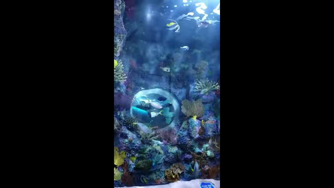 Arch 2, Aquarium Restaurant, Nashville TN - YouTube