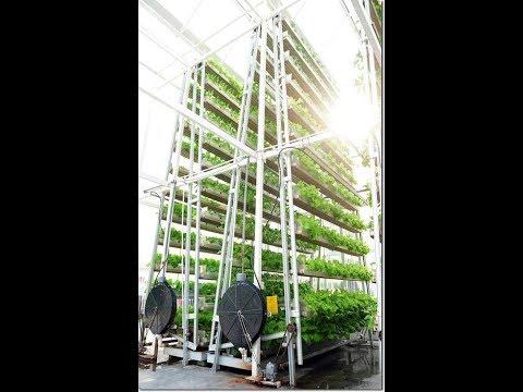 FUTURE VISION FOR STRAWMAN FARM'S VERTICAL INDOOR YEAR ROUND FARM