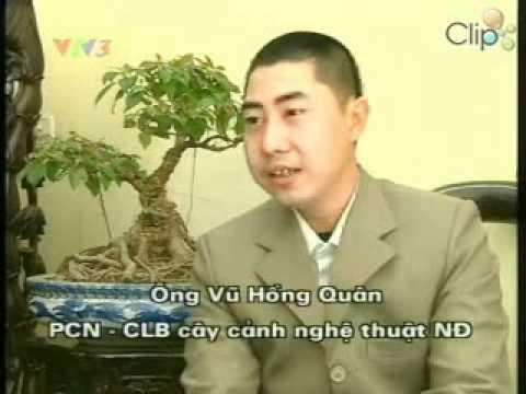 Thú chơi cây cảnh ở Việt Nam