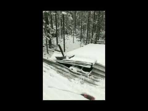 Медведь устроил погром в избушке в Якутии