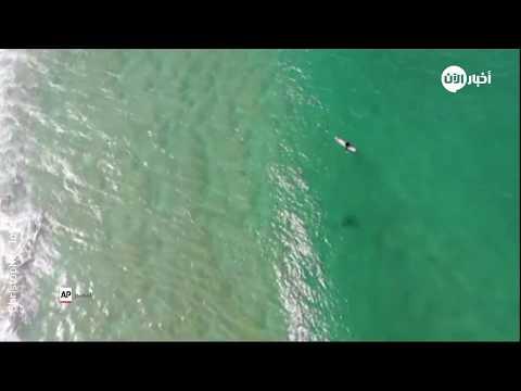 كاميرا درون تكشف قرشاً تحت لوح متزلج على الماء في استراليا  - نشر قبل 2 ساعة