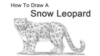 How to Draw a Snow Leopard(Visit http://www.How2DrawAnimals.com or my channel for more animal drawing tutorials and don't forget to PAUSE the video after each step to draw at your own ..., 2012-12-18T08:10:32.000Z)