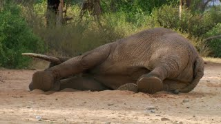 Safely Tranquilising An Elephant  | This Wild Life | BBC