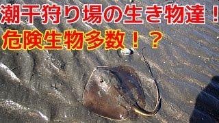 ふなばし三番瀬海浜公園で発見した生き物の動画です! 可愛い生物から危...