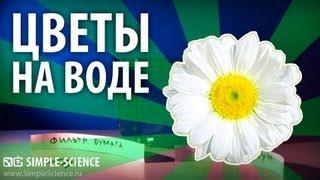 Бумажные цветы на воде - физические опыты(Почему так происходит: http://simplescience.ru/video/paper_flowers_on_water/ Сайт
