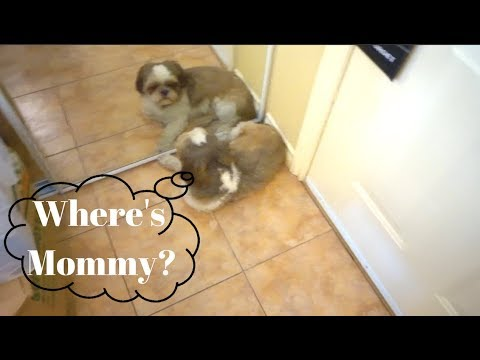 Where's Mommy!