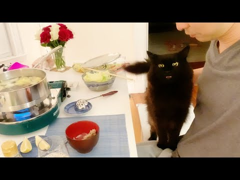 My cat repeatedly asks some chicken from the hot pot - super cute from YouTube · Duration:  10 minutes 21 seconds