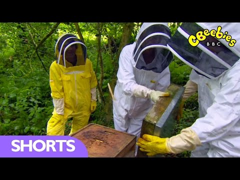 CBeebies: Beekeeping in Snowdonia - Mr Bloom Here and There