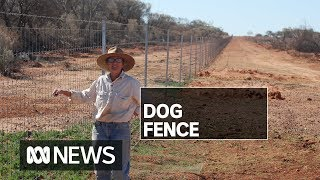 Wild dog controls and a 100km-long fence will bring sheep back to south-west Queensland   ABC News