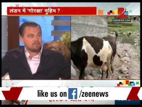 London : Leonardo Dicaprio may support RSS campaign of saving Cows