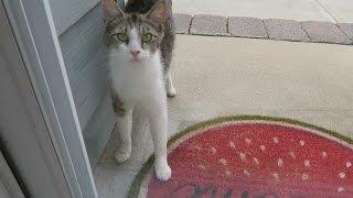 Friendly Feral Cat Wants Breakfast