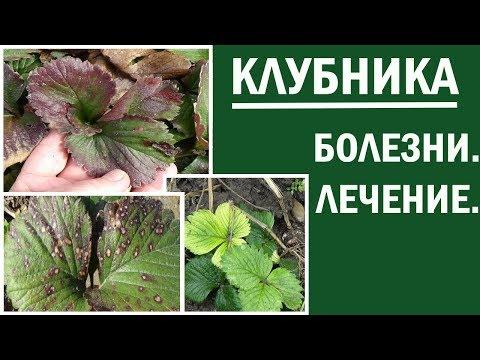 Вопрос: Какие есть виды клубники и земляники садовой, их фото, в чем различия?