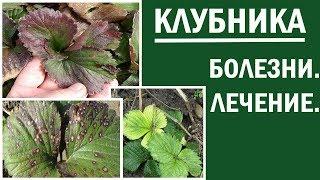 Клубника весной  Пятнистые  красные и желтые листья на клубнике  Что делать и чем лечить