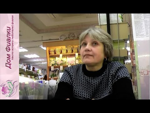 ДФ.Нина Гриша: авторская селекция глоксиний (ГриН-)