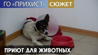 Никопольский приют для бездомных животных