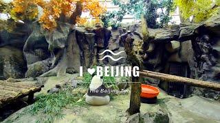 I 💗Beijing-The Beijing Zoo
