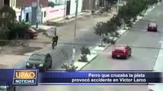 Perro provocó que cruzaba la pista accidente de tránsito en Víctor Larco