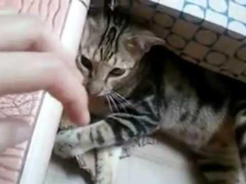 TAMARA: Dont Touch My Box