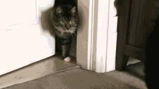Прикол. Кот пришел домой(Больше смешного видео на http://rufun.net/fun/1810/, 2015-04-08T15:21:22.000Z)
