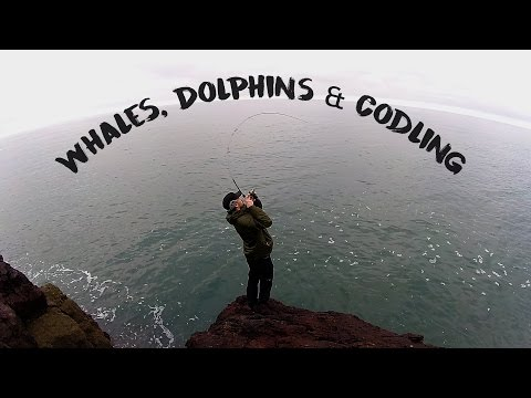 Whales, Dolphins &