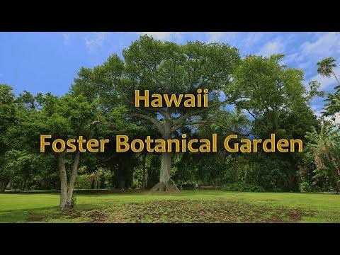 Hawaii Foster Botanical Garden, Oahu Hawaii