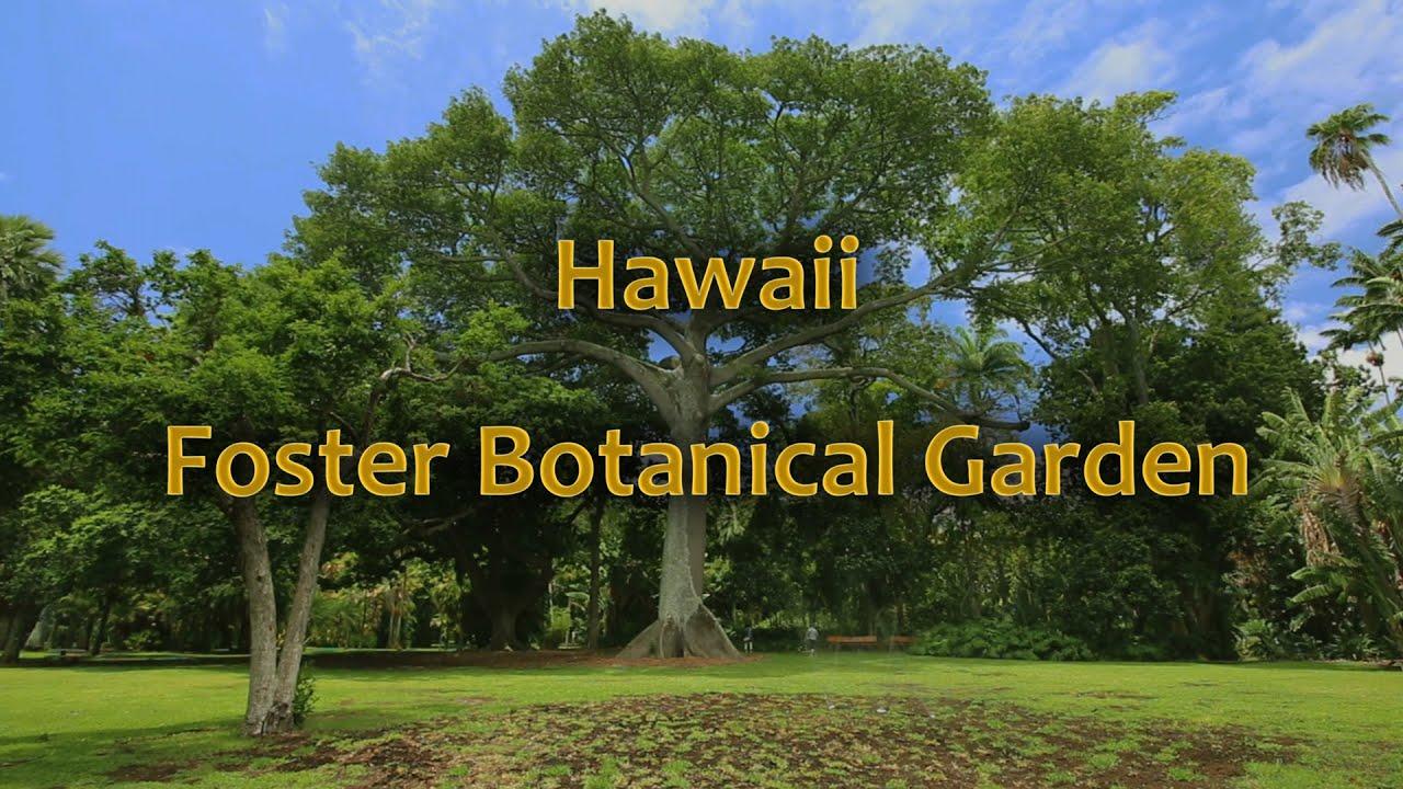 Hawaii foster botanical garden oahu hawaii youtube for Foster botanical garden honolulu