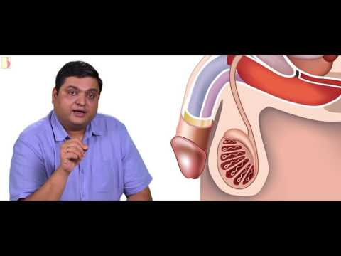 SPERM FACTOR ( Language - Marathi )