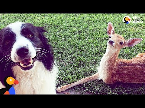 3-Legged Deer Is So Grateful His Mom Saved Him | The Dodo