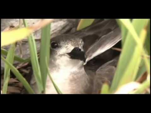 aves-de-rapa-nui-episodio-1