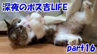 保護猫ボス吉の楽しい深夜時間 part16