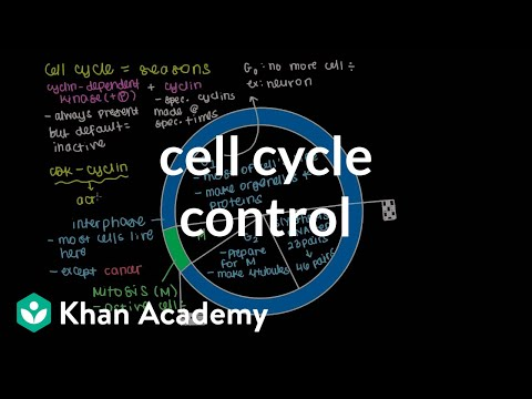 Cell cycle control | Cells | MCAT | Khan Academy