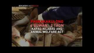 Illegal dog-meat trade still prevalent in Northern Luzon | Reporter