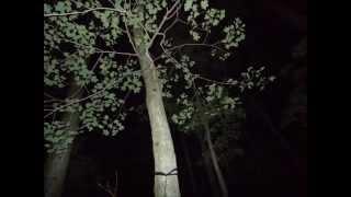 Appalachian Trail Loner #95 NIGHT OF THE OWLS 2012 Thru Hike