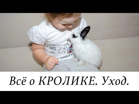 КРОЛИК ПЛЮСЫ и МИНУСЫ. УХОД за кроликом. Наша Масяня ��