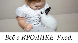 пЛЮСЫ И МИНУСЫ КРОЛИКА ДОМА)
