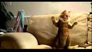Cat Dances To Michael Jackson