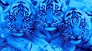 Ju Ju Hand - The Blue Cats.wmv