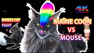 4k Cat| Maine Coon cat plays with a mouse