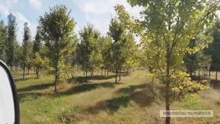 Tree Fields Sneak Peek