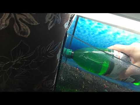 Запускаю новый аквариум на 30л (засеял ковёр на дно! Семена с китая!)