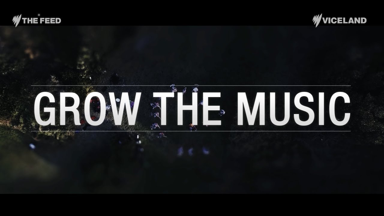 Grow The Music The Feed Youtube
