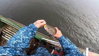 Рыбалка осенний отрыв по хищнику