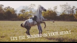 Let the sunbird in your heart | Осеннее лето :3