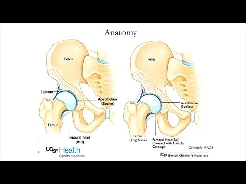 Hip Preservation In The Active Adult