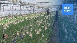 '신종 코로나' 우려로 화훼농가 울상…꽃 선물 운동까지…